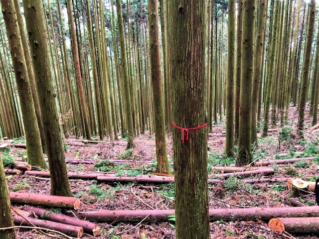 林業イメージ.jpg