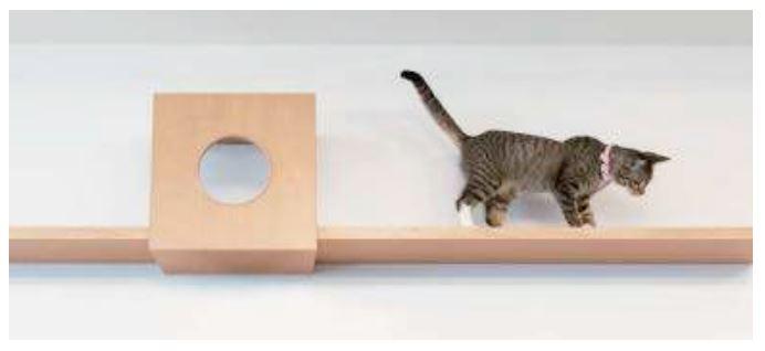 Cat_daiken.png